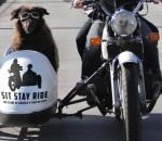Sit Stay Ride